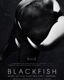דג שחור 2013